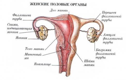 kishechnik-boli-otdayut-vo-vlagalishe