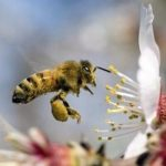 Как помогают животные растениям?