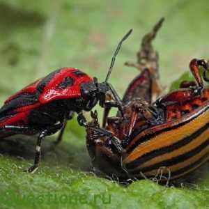 Какие существуют насекомые?
