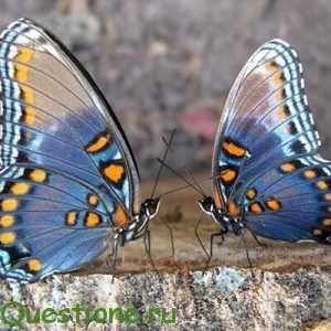 Кто такие бабочки?