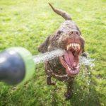 Почему собака много пьет?