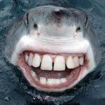 Зачем акулам так много зубов?