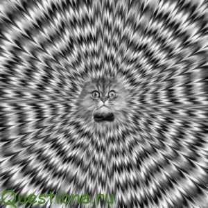 Как получить галлюцинации