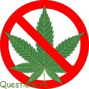 Как обмануть тест на марихуану