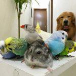 Как выбрать домашнее животное?
