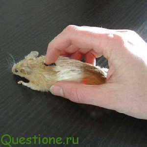 Какая мышка лучше?