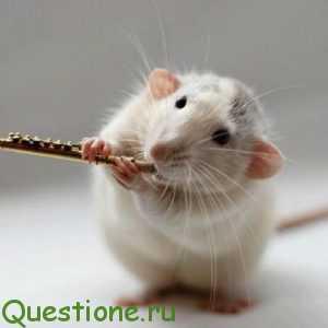 Какая мышь лучше?