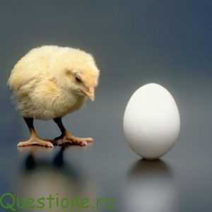 Что появилось первое - яйцо или курица?