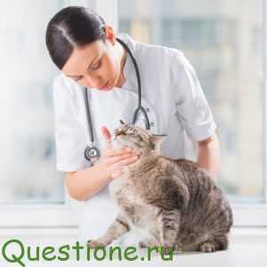 Как проводится операция кастрации?