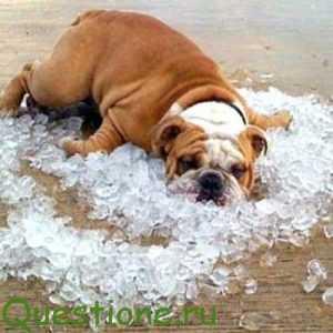 Какие средства уберегают от осложнений со здоровьем в летнюю жару?