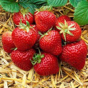 Почему клубника может быть опасной ягодой?