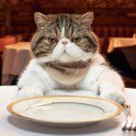 Что делать если мой кот хочет есть, а еды нет т.к. он все сожрал?