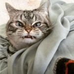 Как объяснить коту что он не прав