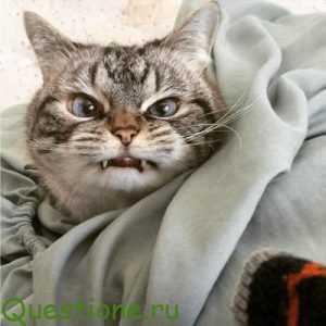 Как объяснить коту что он не прав?