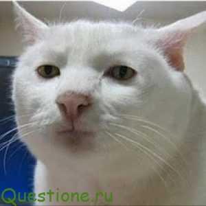 Как объяснить коту что он дебил?