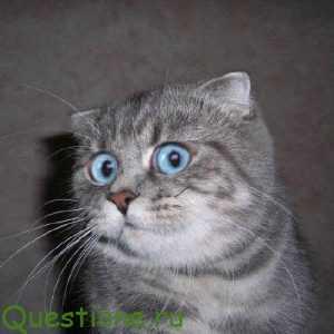 Как объяснить зачем коту усы объяснить детям?