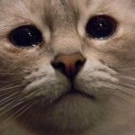Как объяснить значение фразеологизма одним словом «кот наплакал»?
