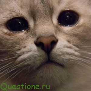 """Как объяснить значение фразеологизма одним словом """"кот наплакал""""?"""