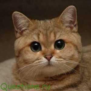 как объяснить коту что он должен работать
