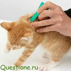 Как наносить спрей от паразитов для домашних питомцев