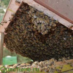 Какие существуют лекарства для пчел?