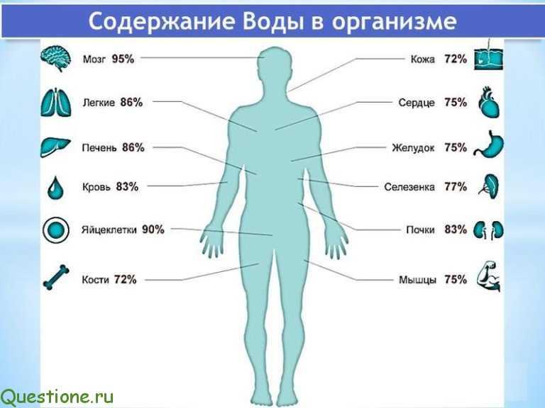 Человек состоит из воды на сколько процентов