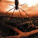 Почему пауки лезут к человеку?