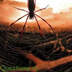 Почему пауки лезут человеку?