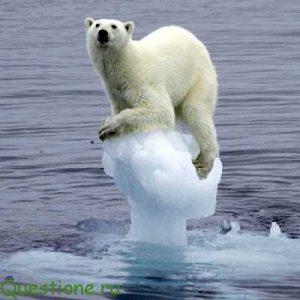 Причины таяния льдов в арктике?