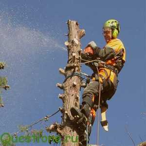 Цена кронирования деревьев?