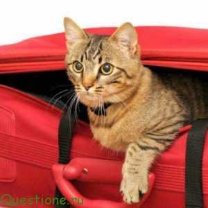 Что необходимо коту перед поездкой на дачу?