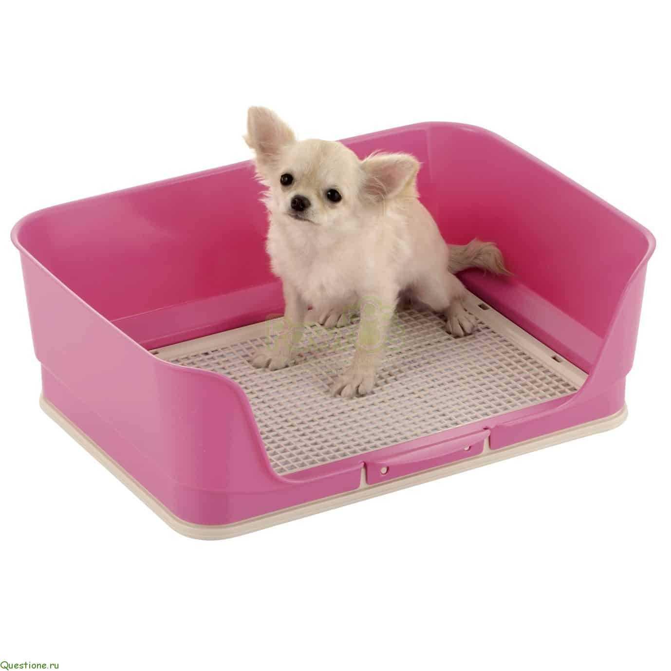 Для не очен аккуратных собак или просто для защиты стен, есть собачьи лотки с бортами.