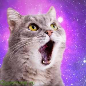 Почему кошка мяукает без причины постоянно?